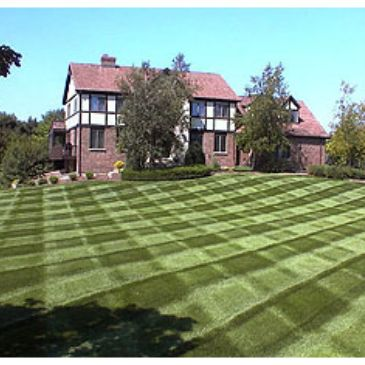 Since 1989, mowing lawns has been the bread and butter of Success Groundskeeping.  We Love it!  It's