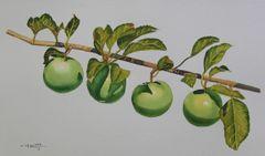 Apple Tree II
