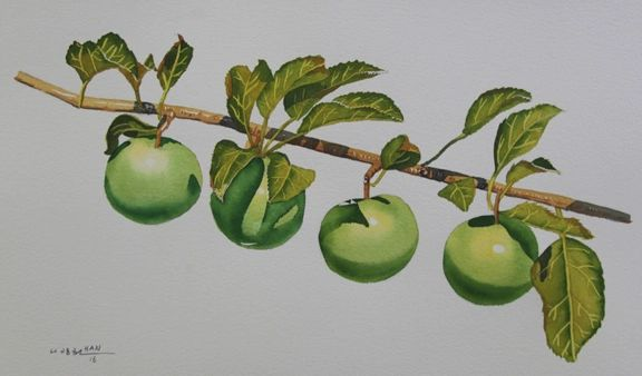 Apple Tree II