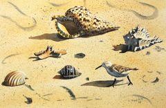 Seashell Series V