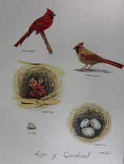 Life of Cardinal
