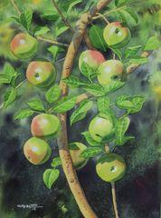 Apple Tree III
