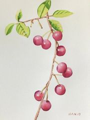 Cherry Tree V