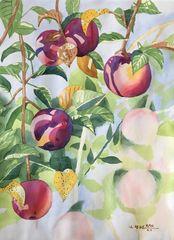 Apple Tree IV