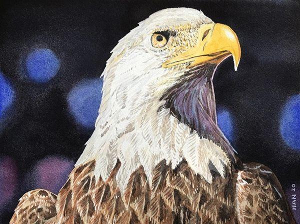 Nature - Bald Eagle I - Framed - Local Pick Up Only