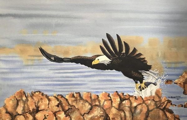 Nature - Bald Eagle III