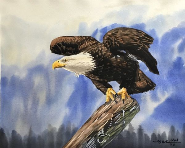 Nature - Bald Eagle II - Not for Sale