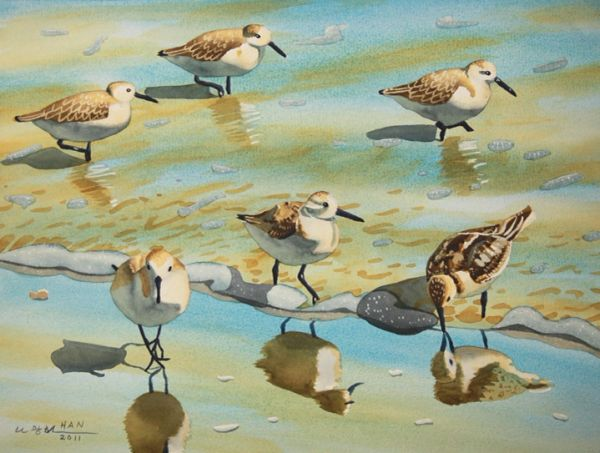 Sandpipers VI - Not for Sale