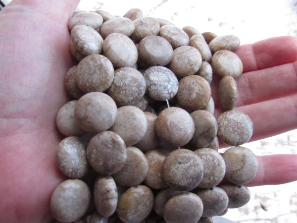Fossilized Coral BEADS Coin 16mm chrysanthemum Fossil bead supply for making jewelry