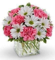 Daisy Dreams Bouquet - und18