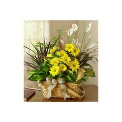 DISH GARDEN WITH FRESH CUT FLOWERS- pla04