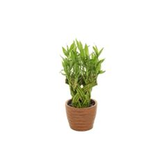 PLANT PERFECTION- pla07