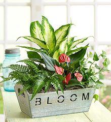 Bloom- pla14