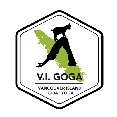 Vancouver Island Goat Yoga Goat Yoga Animal Therapy