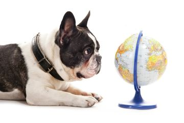 DOG LOOKING AT A GLOBE