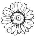 Stampendous-Shasta Daisy Stamp