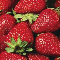Strawberry Eversweet #1 10 plants per bundle