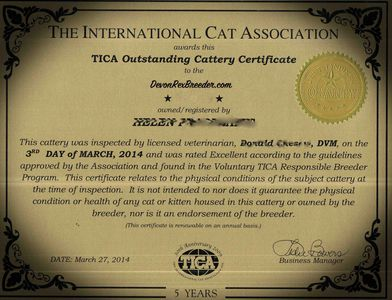Devon Rex cat certificate