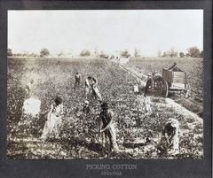 Picking Cotton, Arkansas