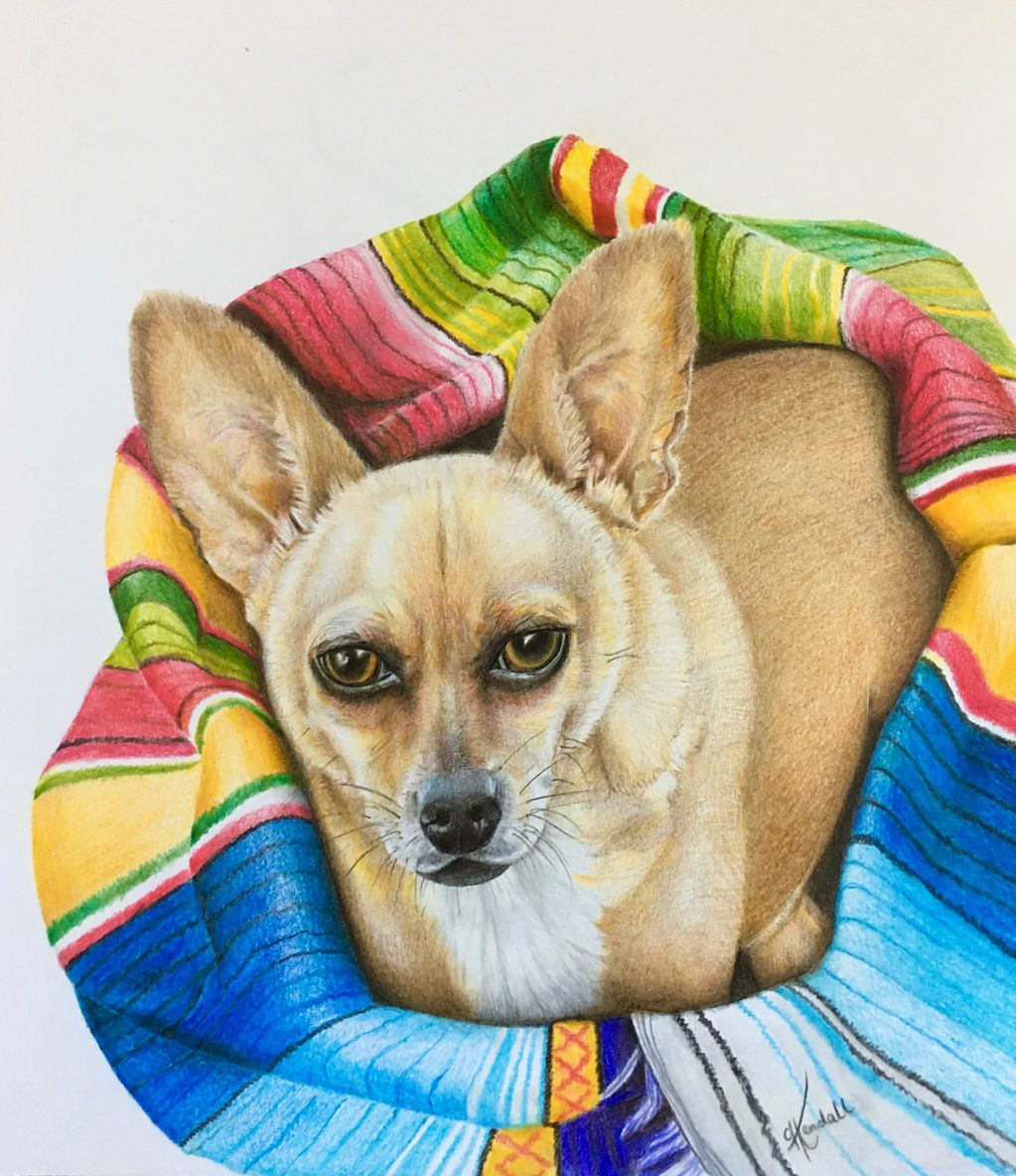 Dog portrait, custom oil pencil drawing, 11x14, by Cassandra Kendall