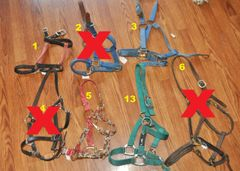 USED nylon halters