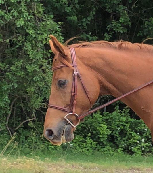 Used Aramas horse bridle