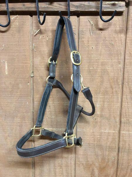 Used Gatsby Halter Horse