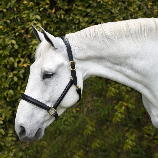 Bobby's English Tack: Silver Spur Padded Leather Halter