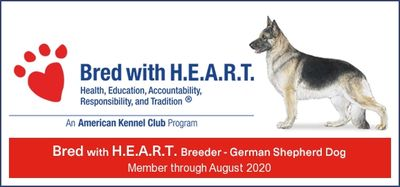 AKC German Shepherd Dog Breeder