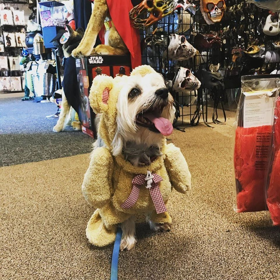 Dog wearing walking teddy bear costume