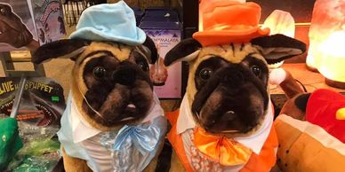 Dumb and Dumber pet costume
