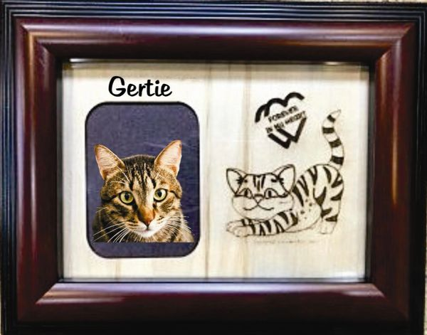 Lost Cat Custom Breed Engraved Wood Picture in Frame - Forever in My Heart (5x7)