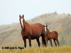 Twister and Her Foal Kansas