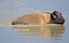 Swimming the Swollen River