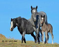 Three Shades Of Grey