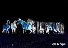 Glowing Horses