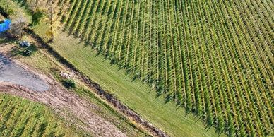 Vineyards, divided by a small stream centered in grassy headlands.