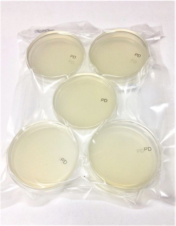 20 PDA Pre-Poured Potato Dextrose Agar Petri Dishes Polystyrene 100mm x 15mm