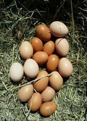 Farm Fresh Eggs - Dozen