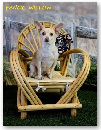 Jackson Hole Country Home Décor: Kaibab Debarked Porch Chair - Handcrafted Pool and Patio Furniture