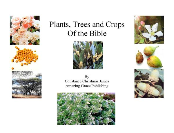 Trees and Plants of the Bible By Constance C. James B. D. Pharm.