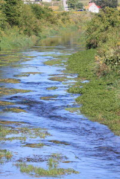 Blue Creek