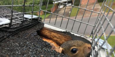 squirrel in entry hole