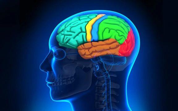 Neuroscience Keys to Transforming Trauma - 2 Day Training