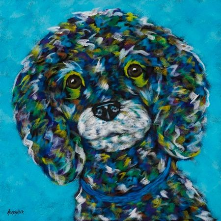 Little One - Toy Poodle