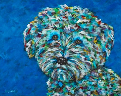 Sweet and Silly! - Schnoodle, Schnauzer, Poodle