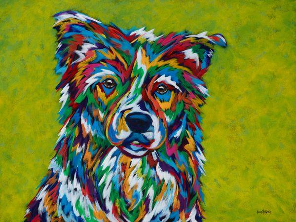 Look Into My Eyes - Border Collie, Australian Shepherd