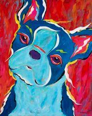 Dazed - Boston Terrier