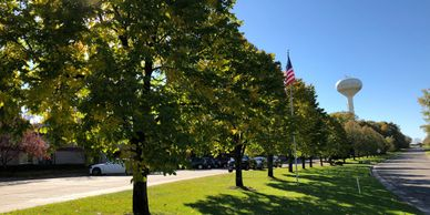 Row of trees in summertime with an American flag.
