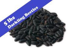 Dried Darkling Beetles 5 lbs